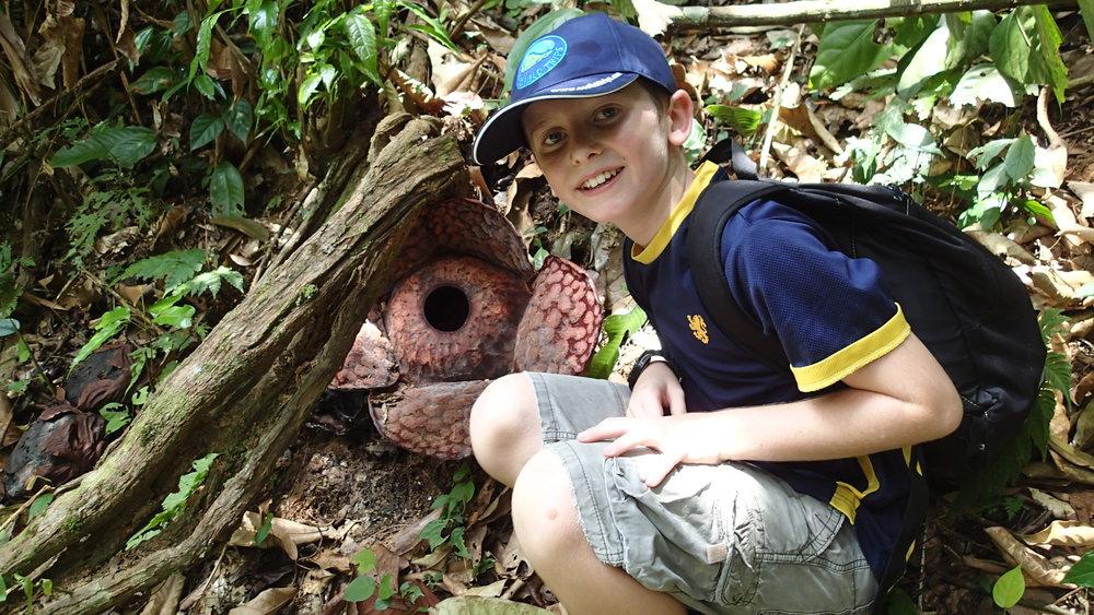 Ipoh, Ulu Geroh, Rafflesia Walk, Student with open rafflesia.JPG