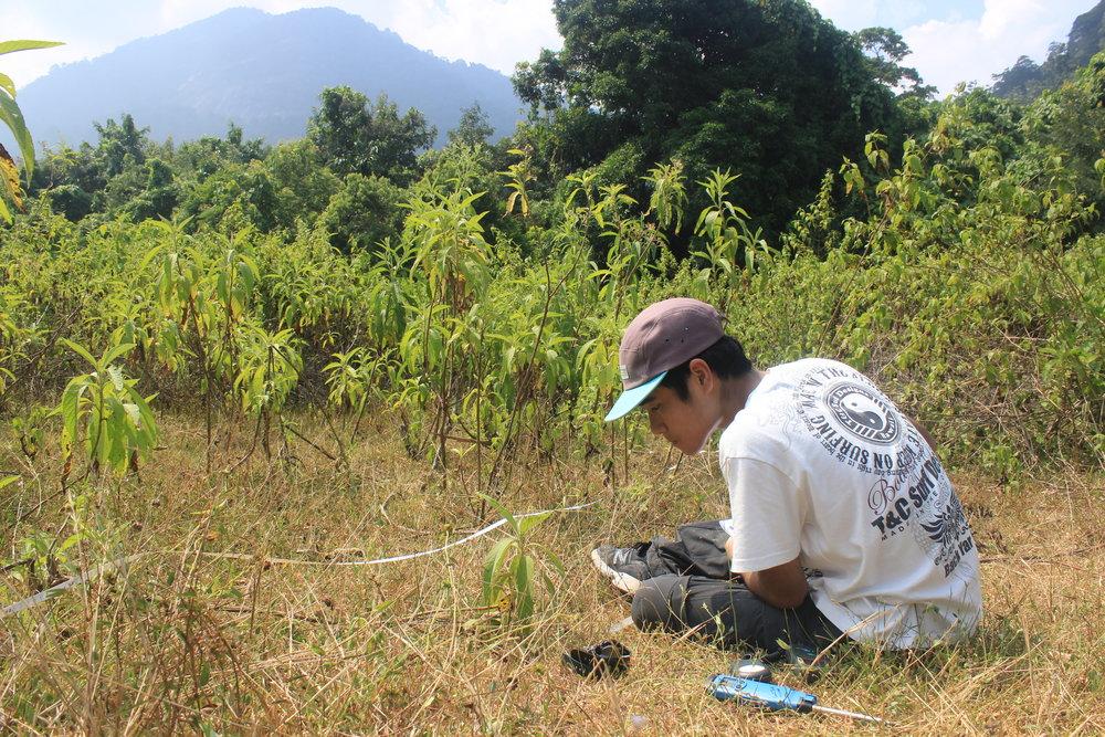 forest survey