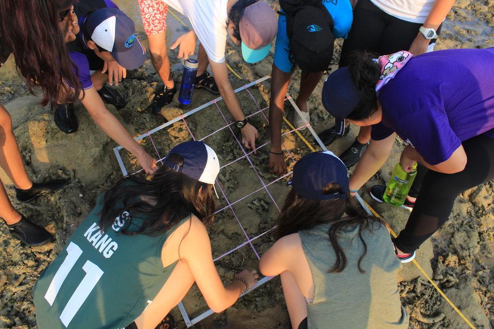 Tioman, Melina, Seashore, Surveys, Quadrat, Group Students.JPG