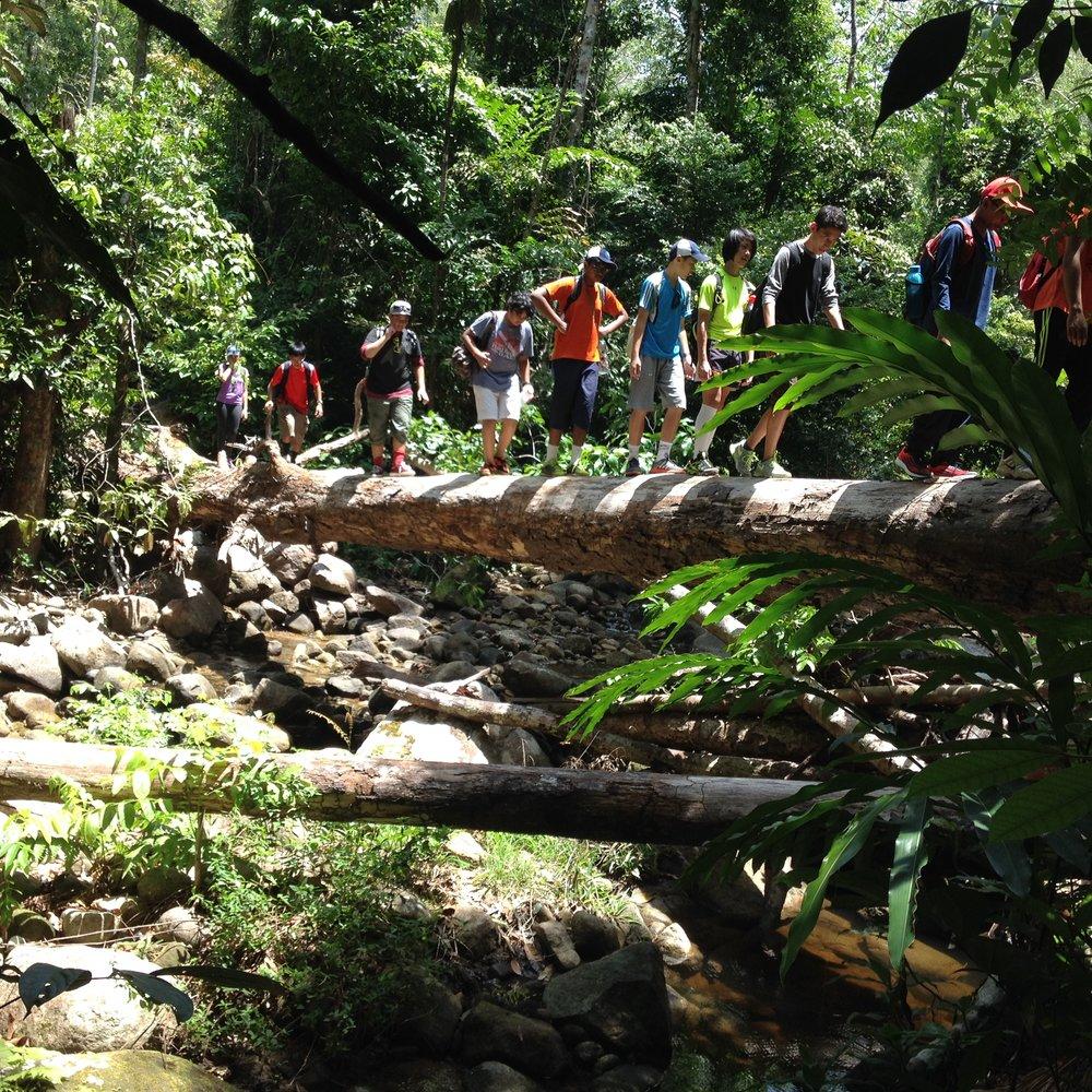 Langkawi, Rainforest Walk, Jungle Trek, Nexus.JPG