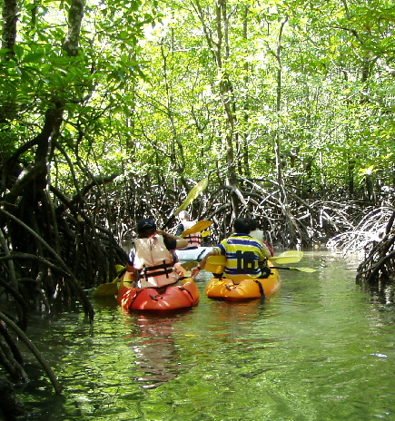 Langkawi, Kilim Geo Park, Mangroves, Kayaking Students.jpg