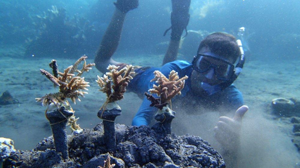 Bali, Amed, Artificial Reef construction, Reef building (3).JPG