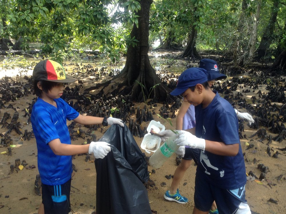 mangrove clean up