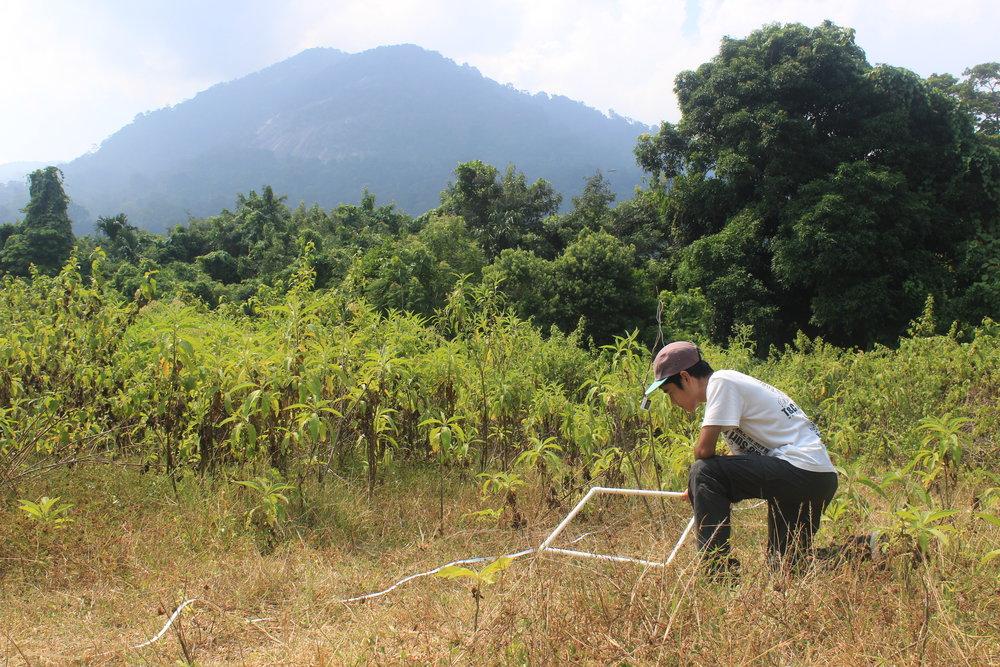 Tioman, Forest, Football Field, Survey, Kajang.JPG