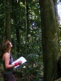 Tioman, Rainforest Survey, Dissertation Student Ash.jpg