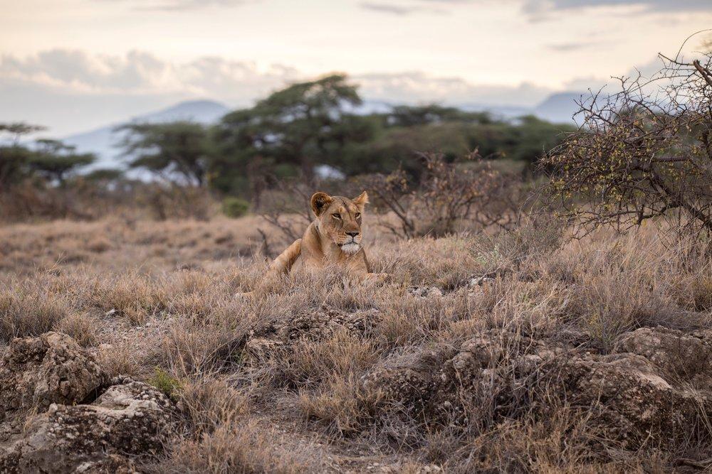 africaa.jpg