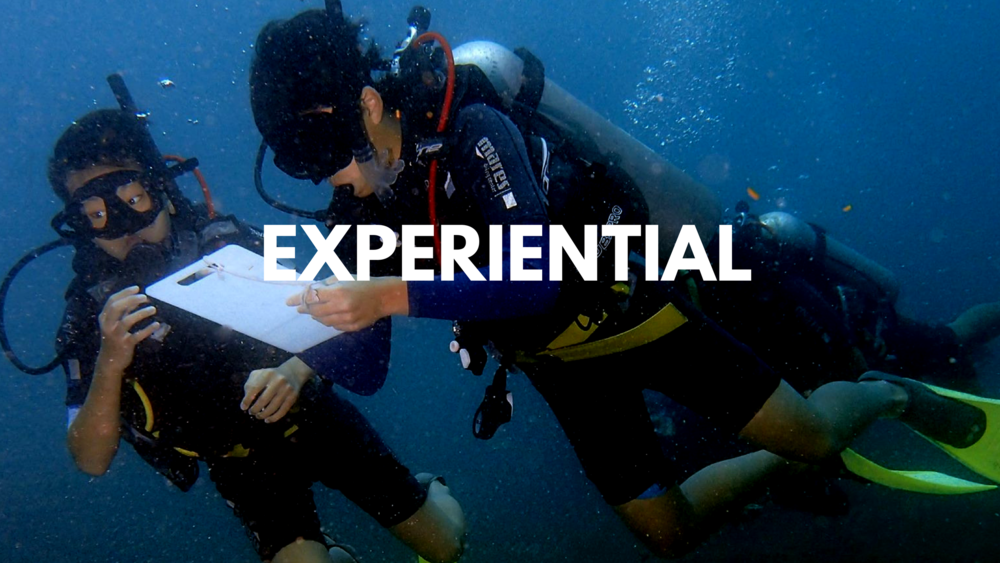 Experiential, Adventure, Teambuilding, Culture and Service