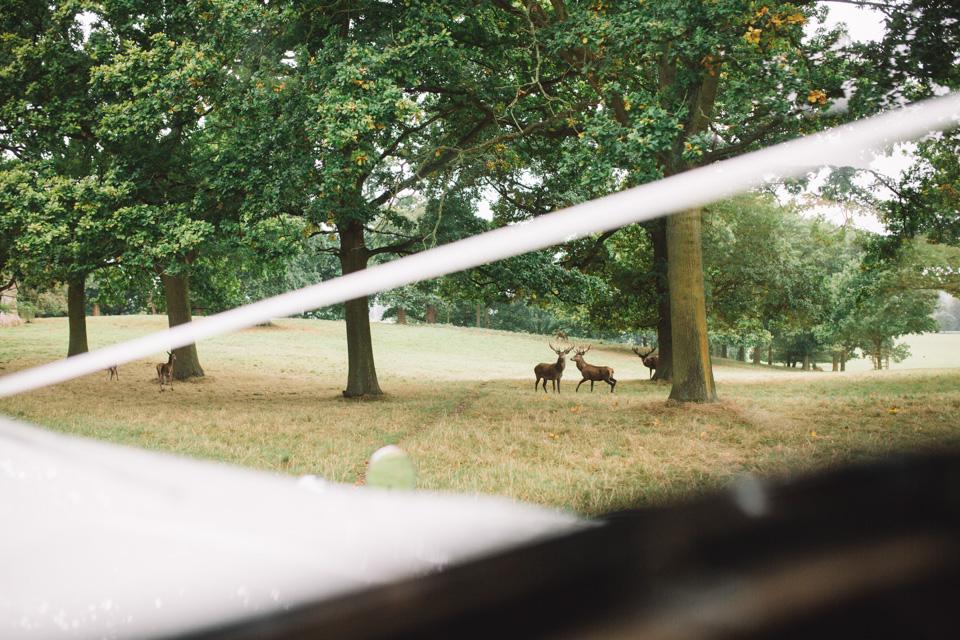 woburn-estate-deer-wedding-photography