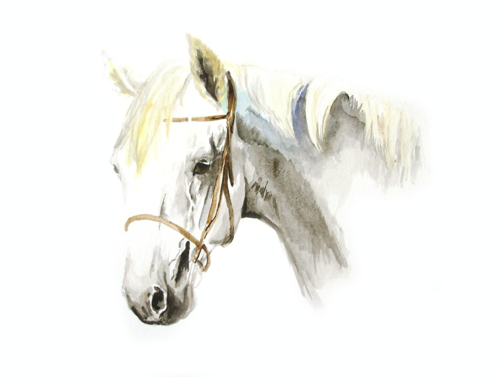 wc.2013.EMartin.horse1.jpg