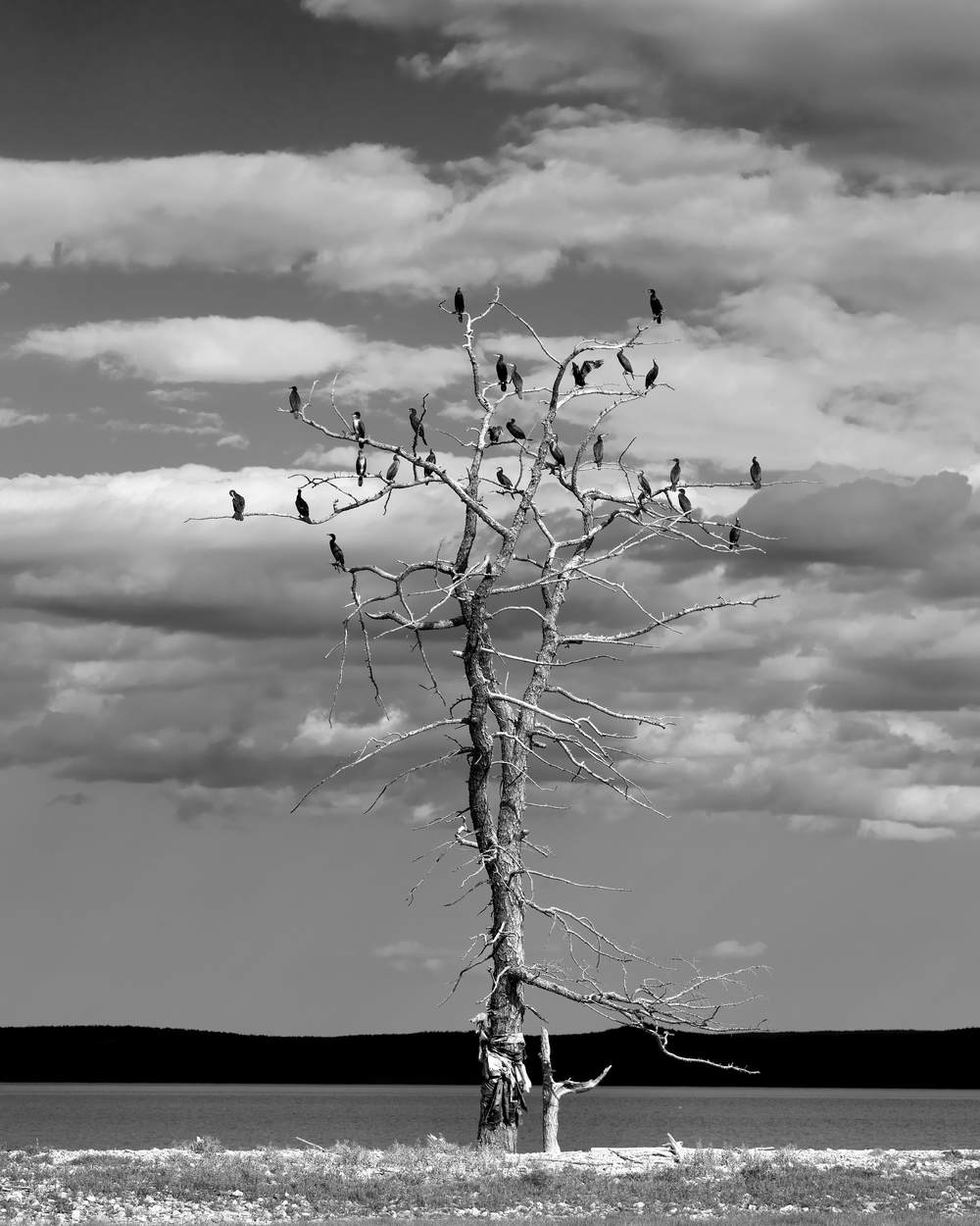 Tree and Birds