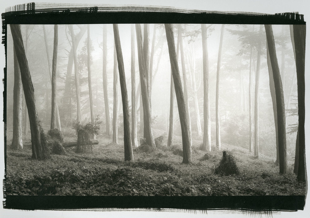 "Trees and Ivy No.1  (Platinum/Palladium Print, 8"" x 14"")"
