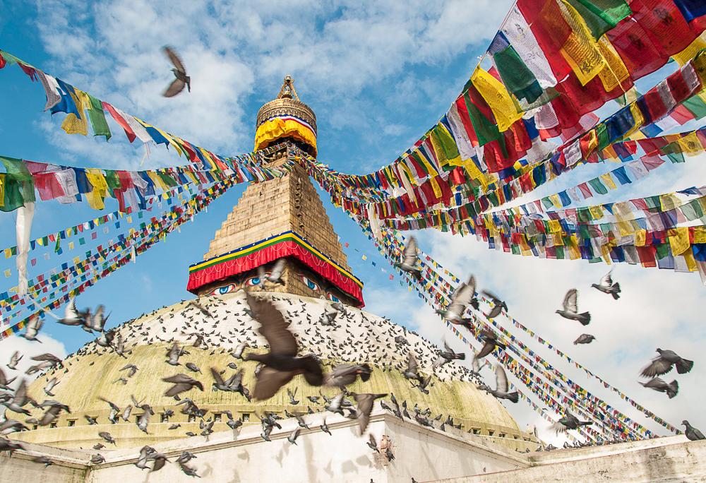 pigeon buddhist personals Retreat in tennessee (tn) on findthedivine:  sacred geometry ,senior , silence, singles,spa,spiritual  anglican,baha'i,baptist,benedictine,buddhist.