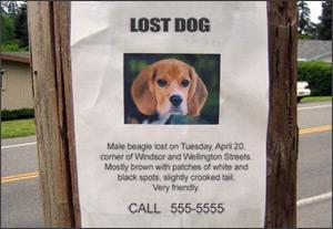lost_dog_poster.jpg