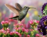 Hummingbird_Garden-300x238.jpg
