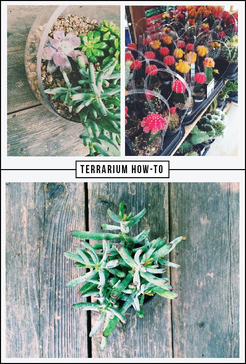 terrariumhowto.jpg