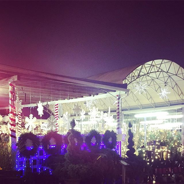 @oaklandnurseries all lit up for #christmastree season. We're serving hot chocolate from 6 to 9 tonight 🌲