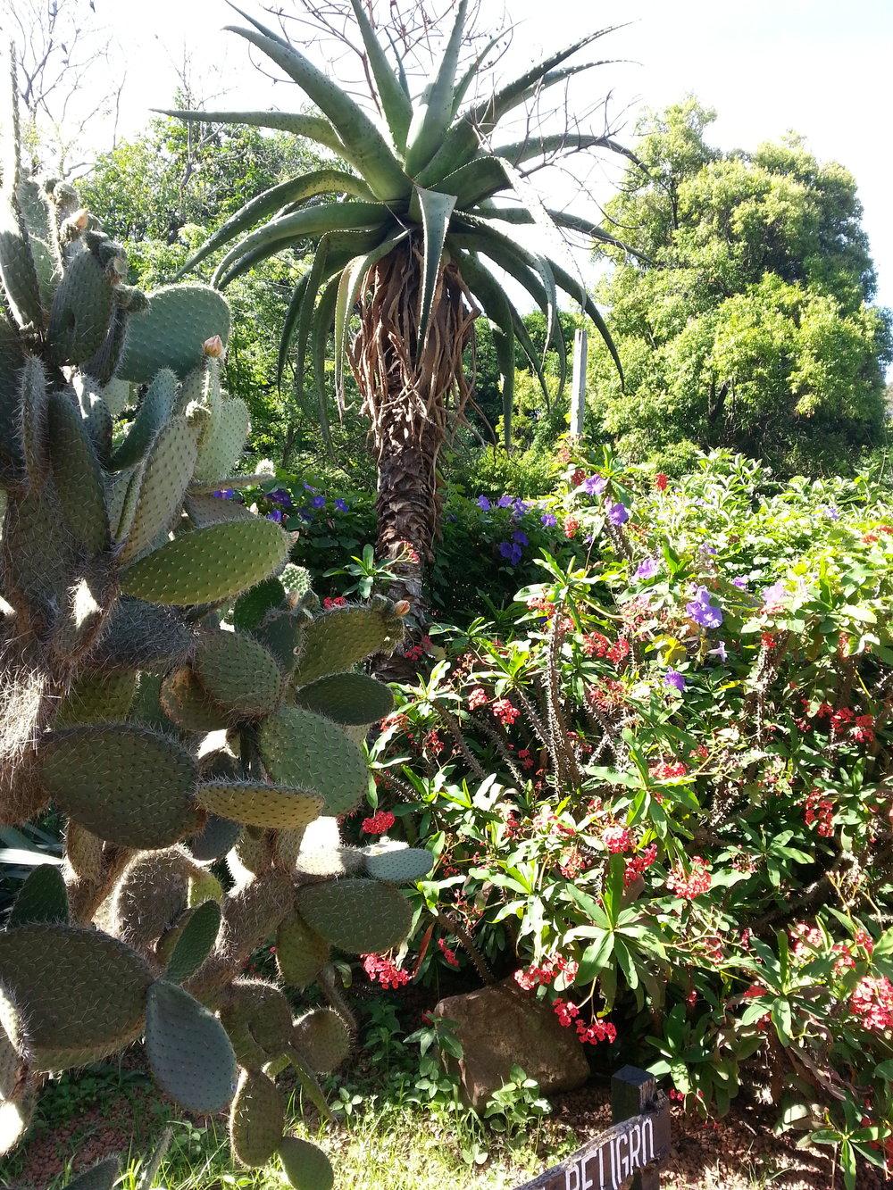 botanical garden 6.jpg