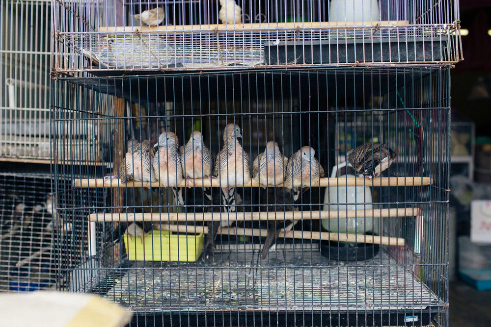 malaca malasia eduardo monica