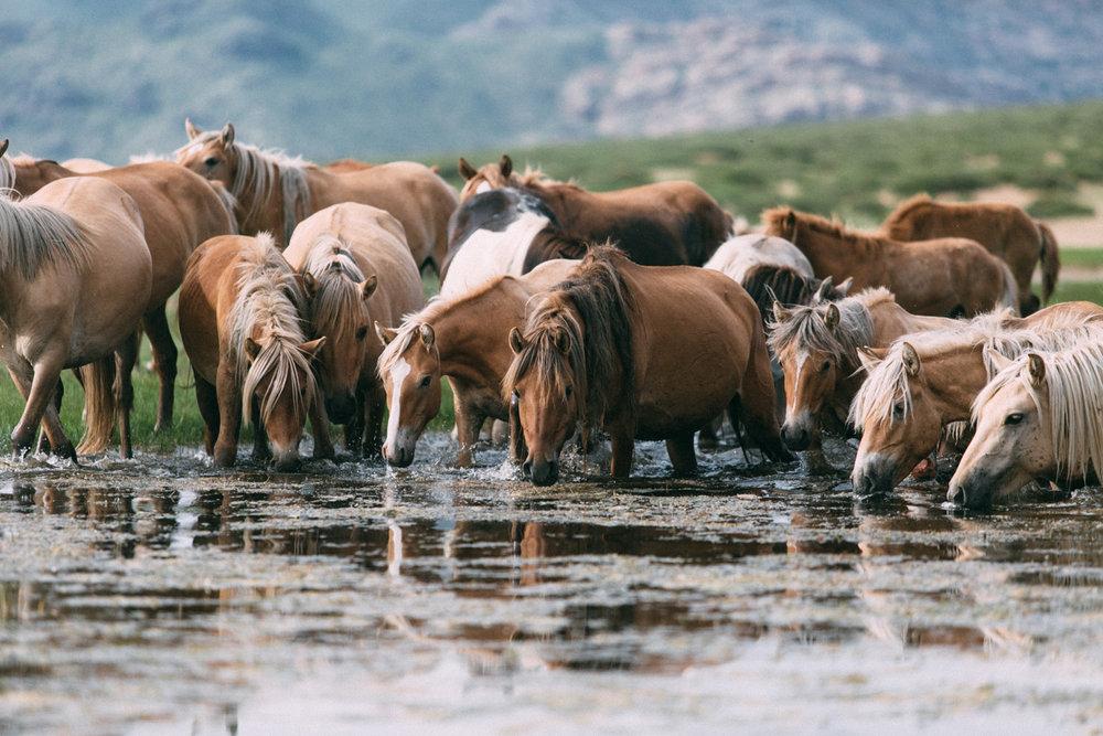 Ver fotos de cavalos selvagem 65