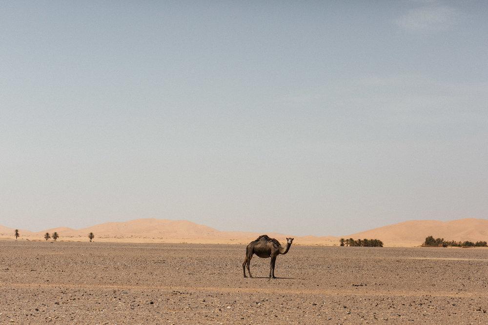 Marrocos 50mm 1.4-51.jpg