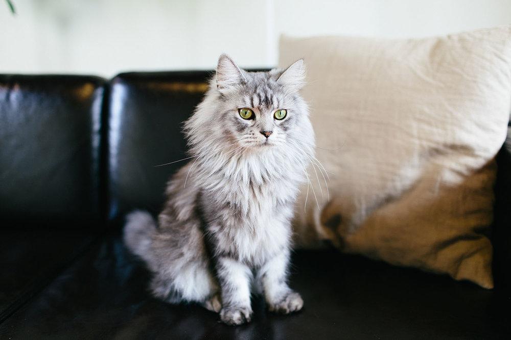 Pets_8.jpg