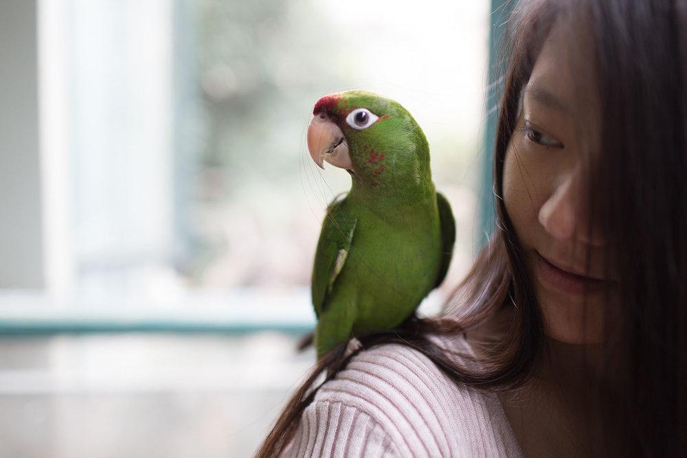 Pets_24.jpg