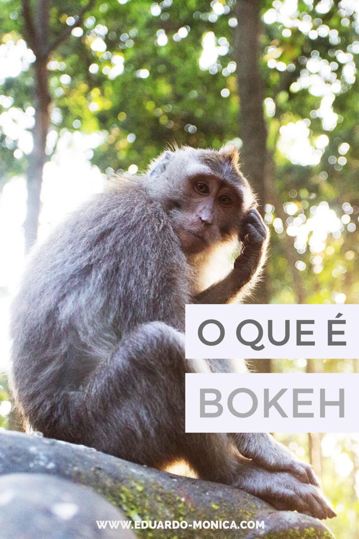 O Que é e Como Fazer o Efeito Bokeh