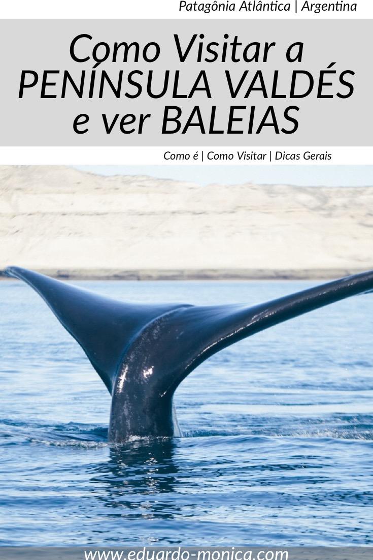 Como Visitar a Península Valdés e Ver Baleias