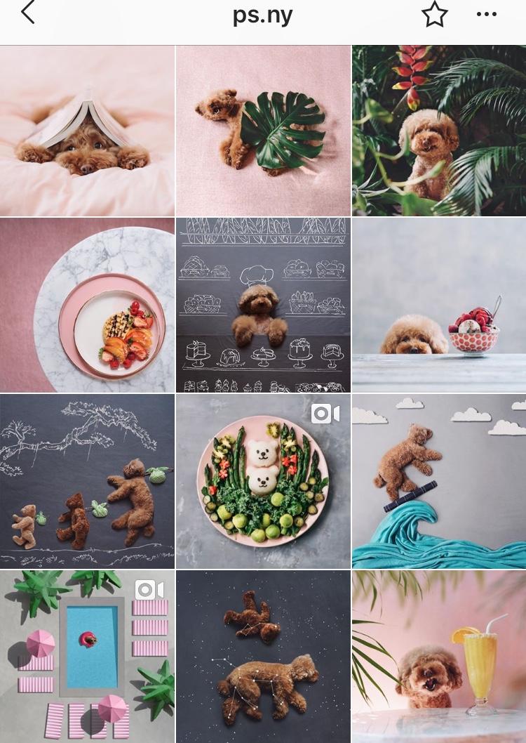 @ps.ny   | 5 Dicas para ter feed de Instagram organizado