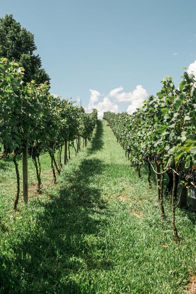 vinicola pizzato serra gaucha