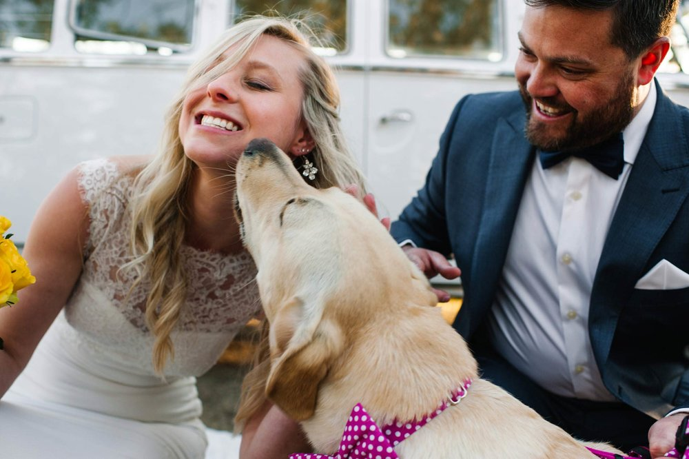Dog licking bride on cheek