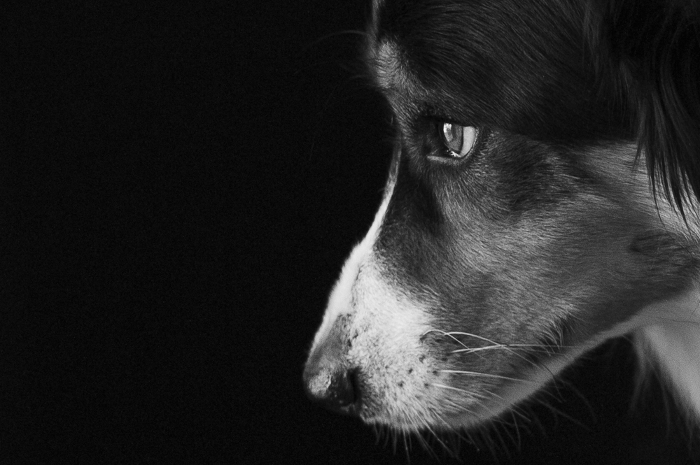 photography sydney dogs.jpg