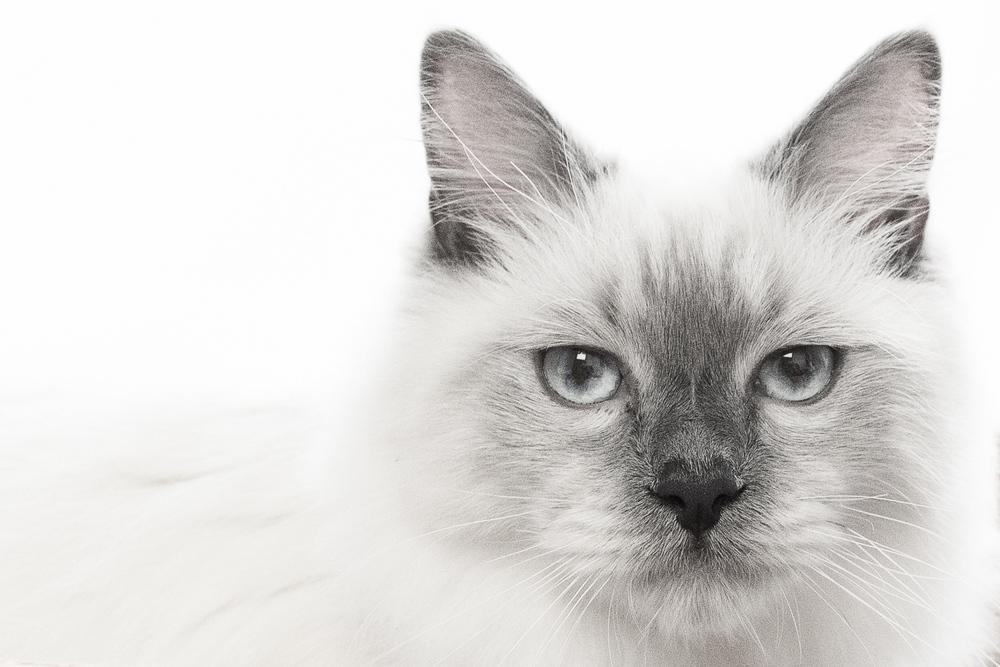 photographer sydney pets.jpg