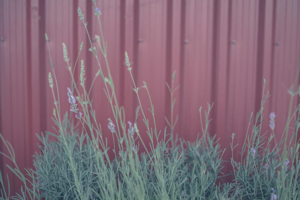 Ragweed Allergy in Spring Seasonal Ragweed Allergy