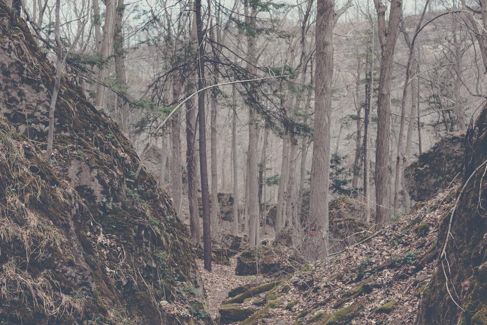 canada woods via Rebecca-Jacobs.com-3.jpg