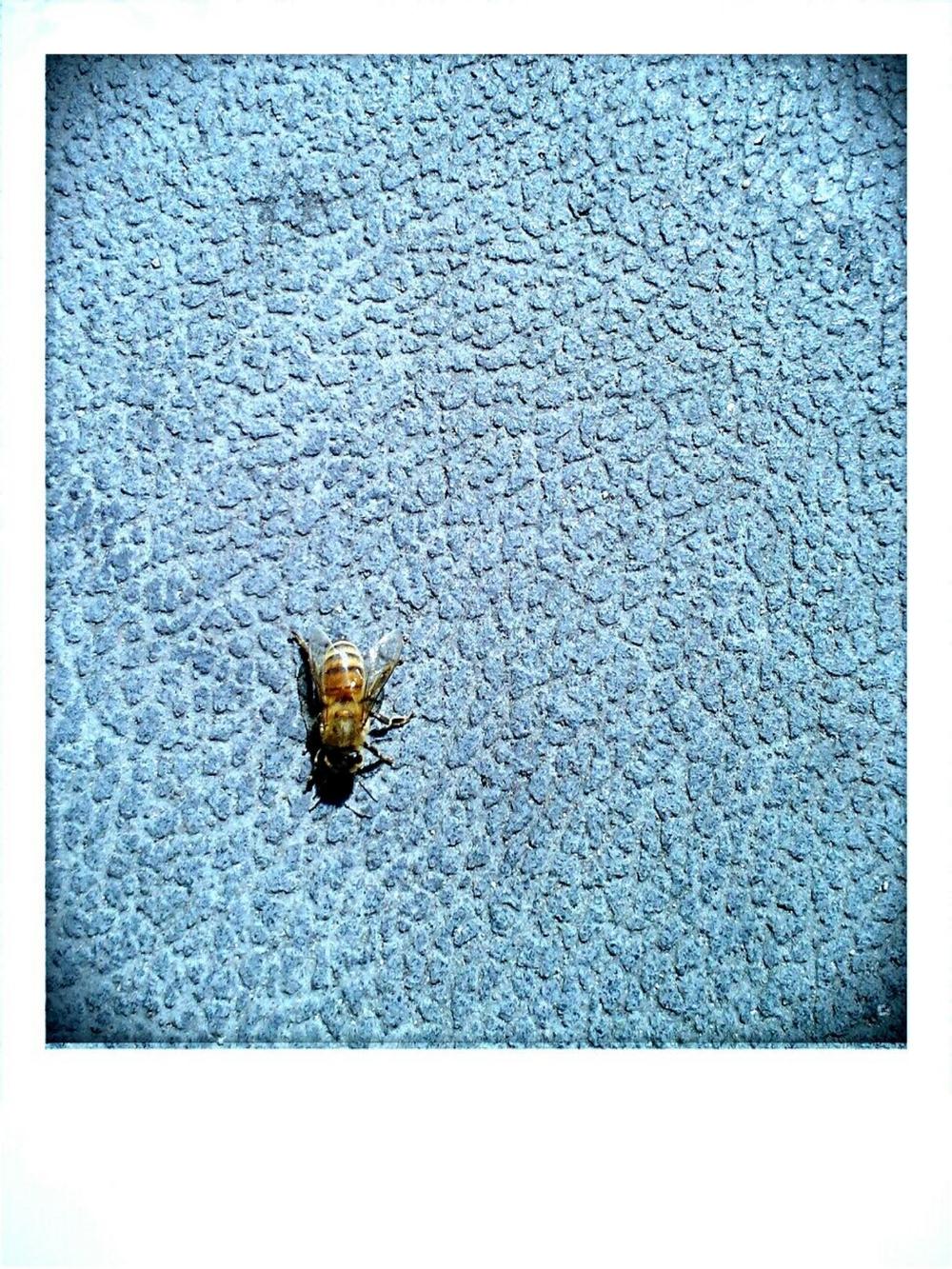 the lone bee.jpg