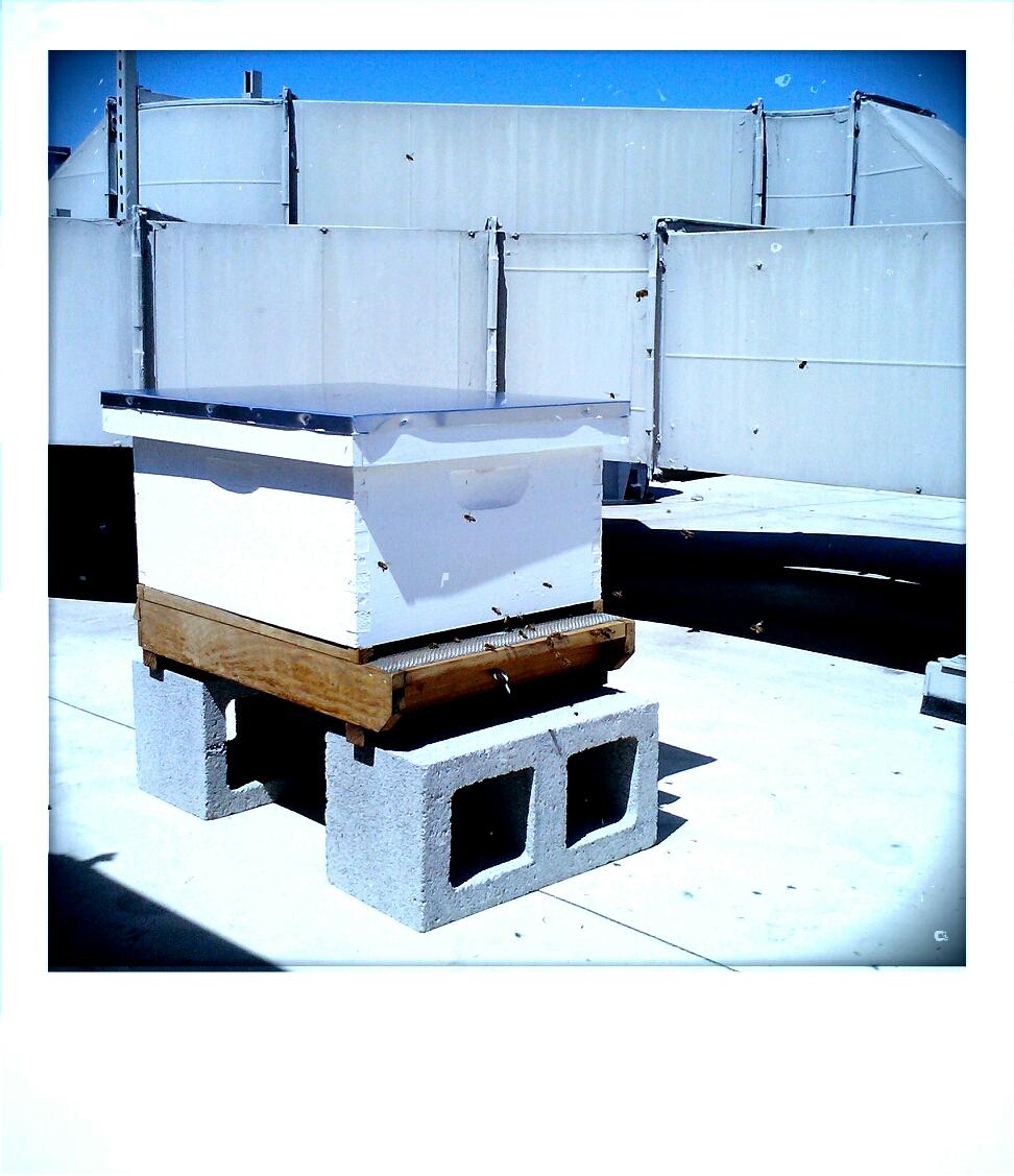 bee hive on roof.jpg