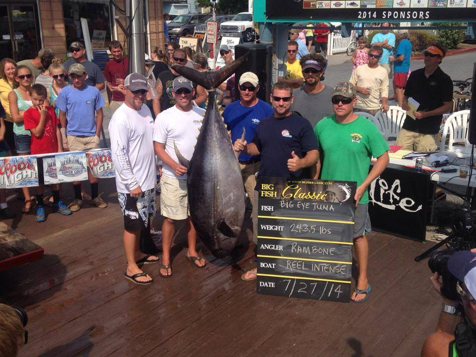 243.5 LB BIG EYE TUNA TO  REEL INTENTS - $35,772