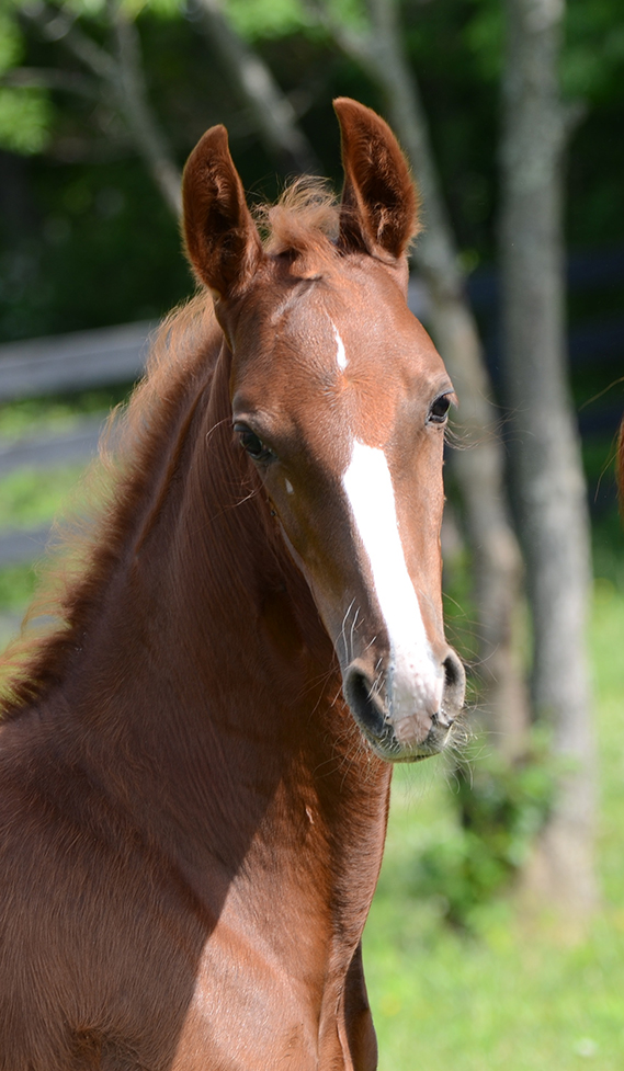 Delirium x Shamrock N Roll 2.21.12 Filly A_LR.jpg