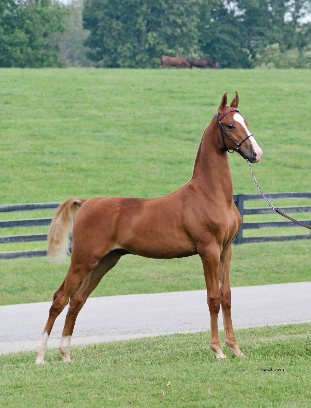 I'm First Weanling Full Body.jpg
