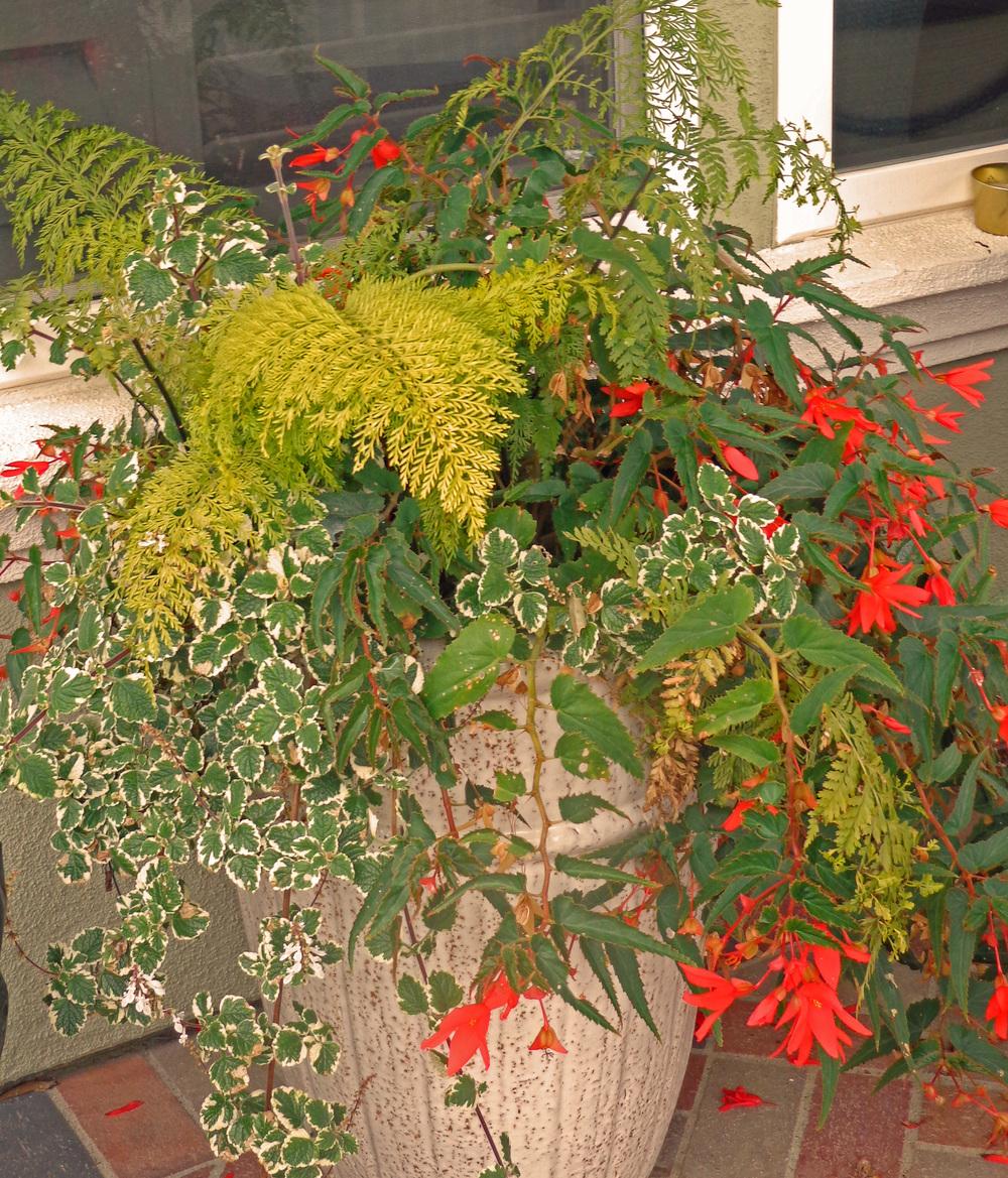 Fine Gardening Heubach Landscape Design San Diego