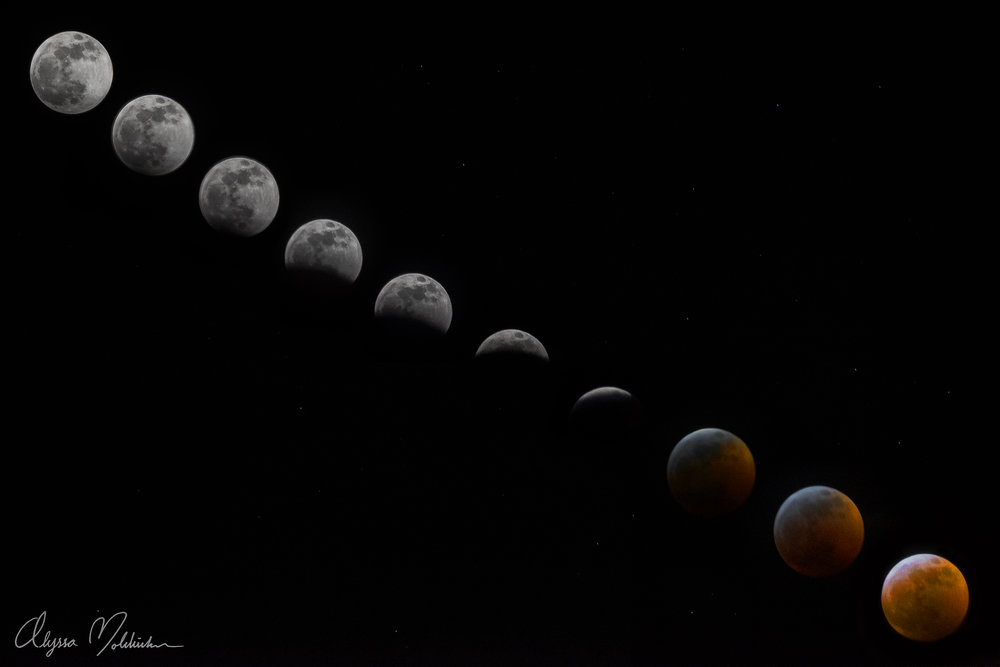 Super Blood Wolf Moon Eclipse - Alyssa Boldischar.jpg