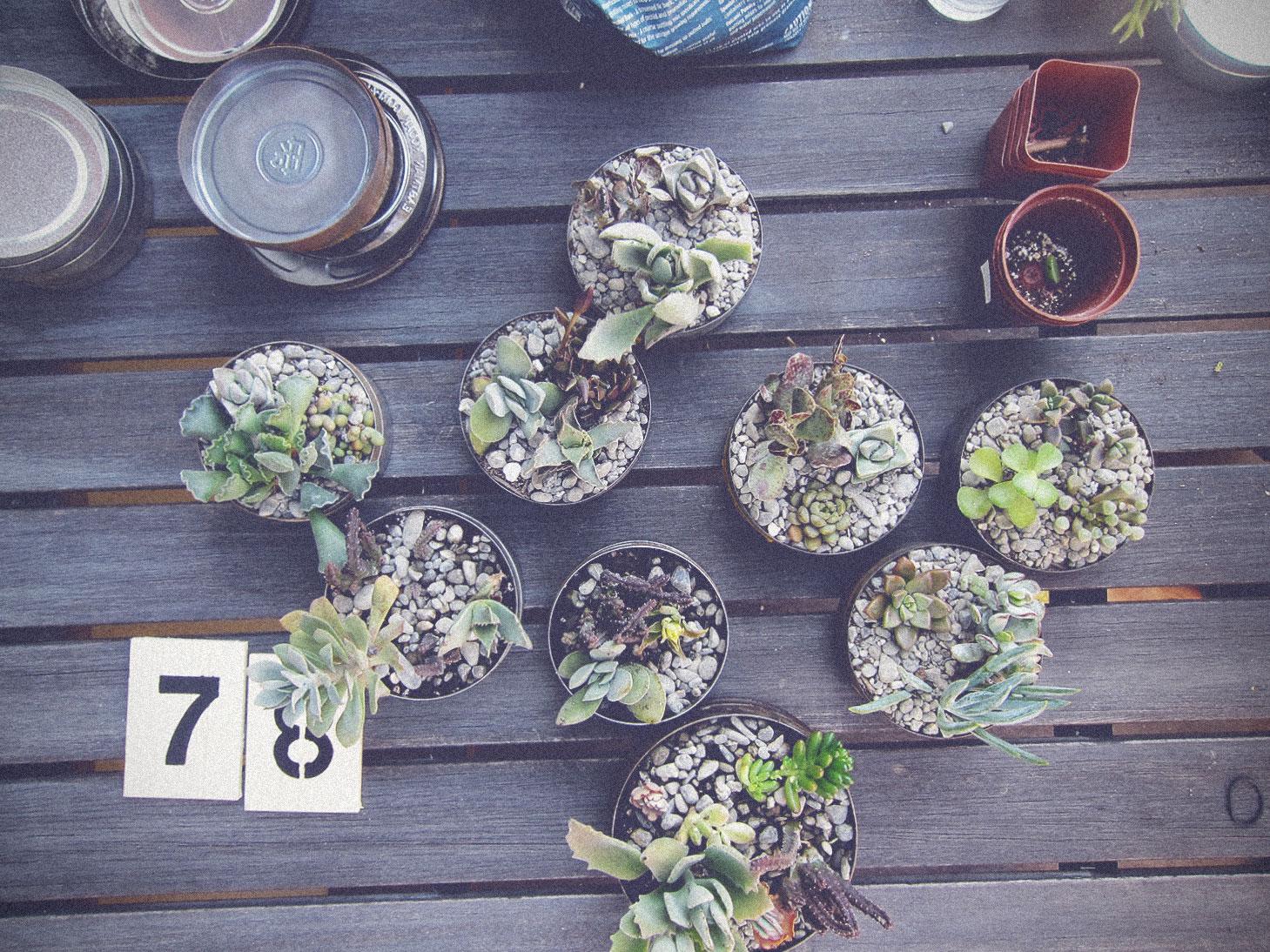 vintage-film-tins-succulents