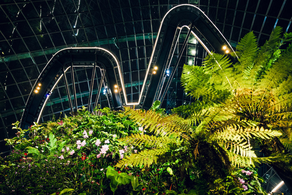 Cloud Forest at night