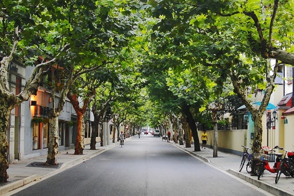 source: http://file.digitaling.com/eImg/image/20150514/20150514105414_62720.jpg  Typical tree-lined streets of Former French Concession.