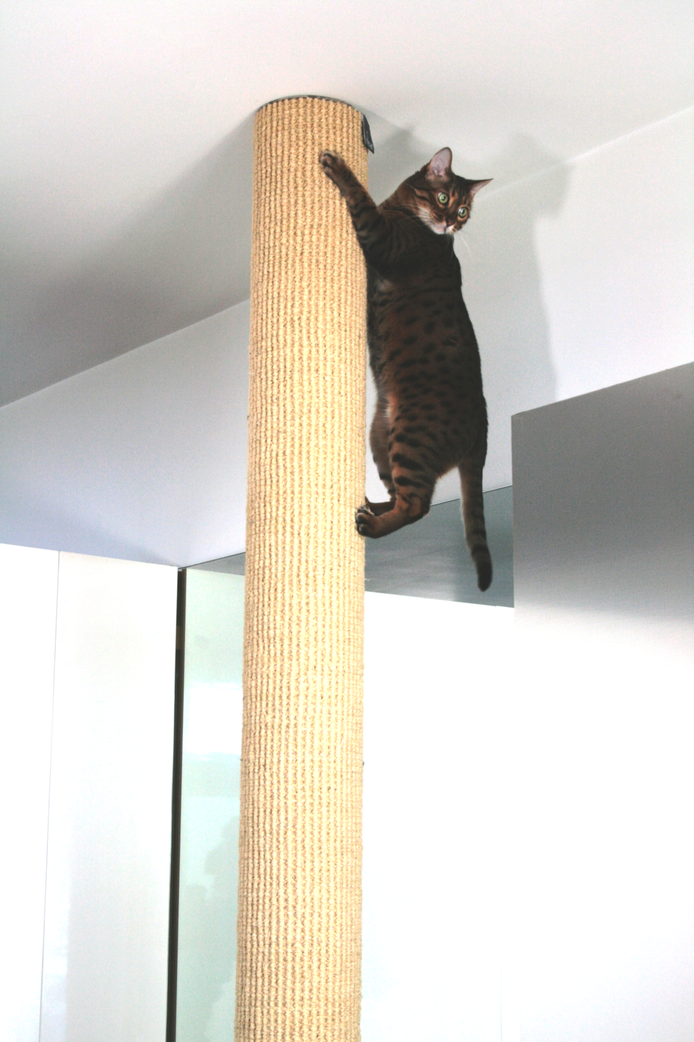 Leroy climbing our first Polecat climber in 2007