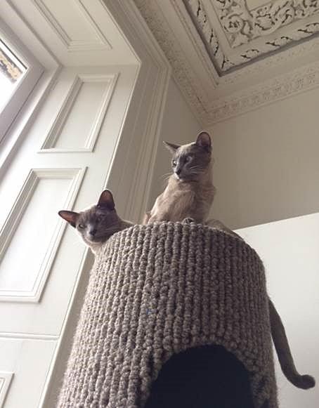 Beano & Bertie