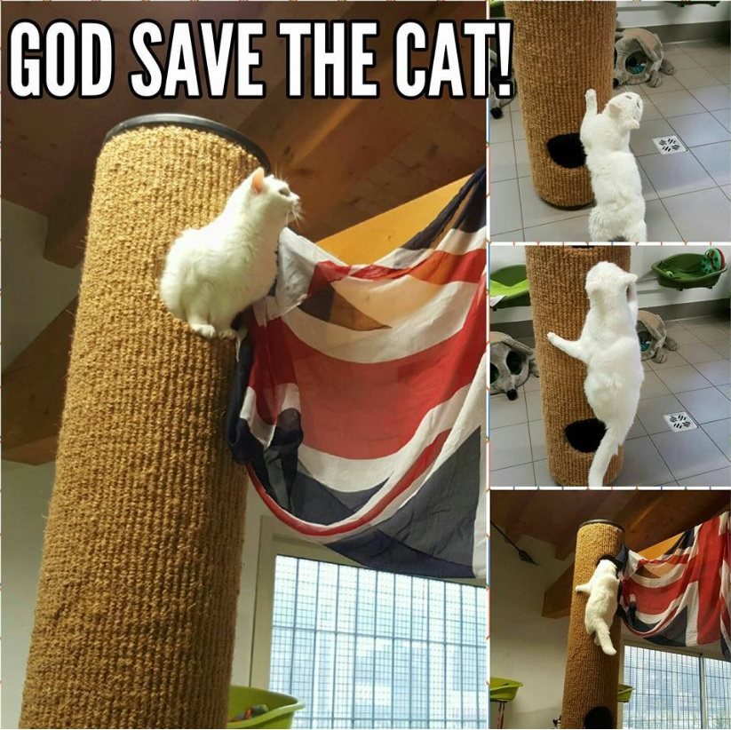 God Save The Cat