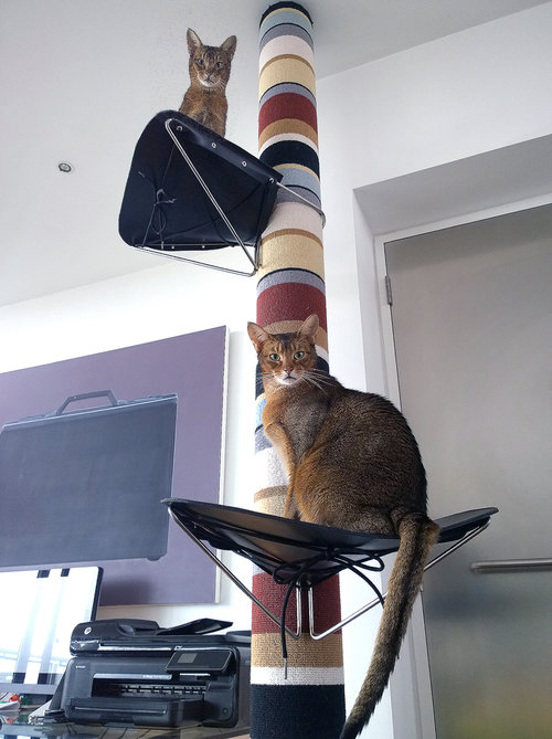 Tuco & Bello testing out our Cat's Cradles
