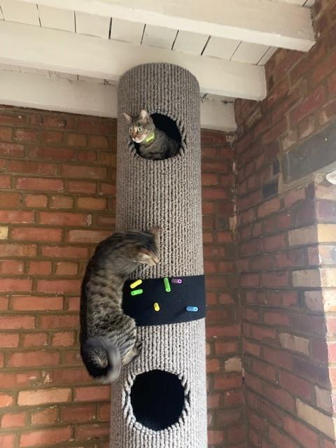 Paul & Chloe's Tibet Wool Tomcat 4